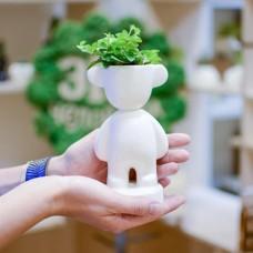 Набор для выращивания Eco Коротыш с ушками